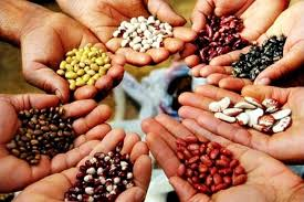Seed Coating Agent