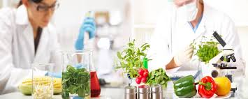 Food Safety Testing Systems&Services